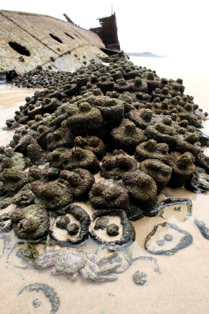 shipwreck -fraser-island-australia